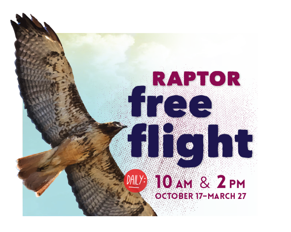 Raptor Free Flight Daily: 10am and 2pm October 17 to March 27