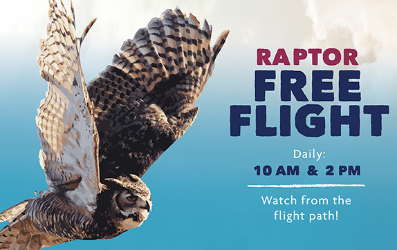 Raptor Free Flight